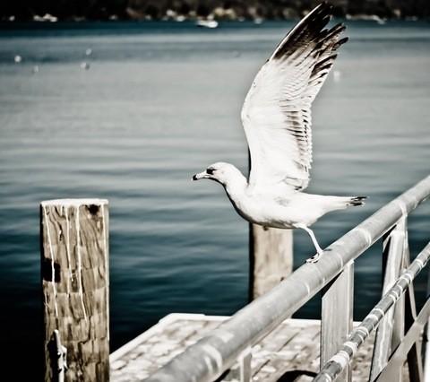 sea-flight-bird-flying
